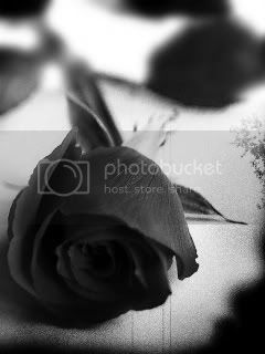 black rose, Pictures, Images and Photos