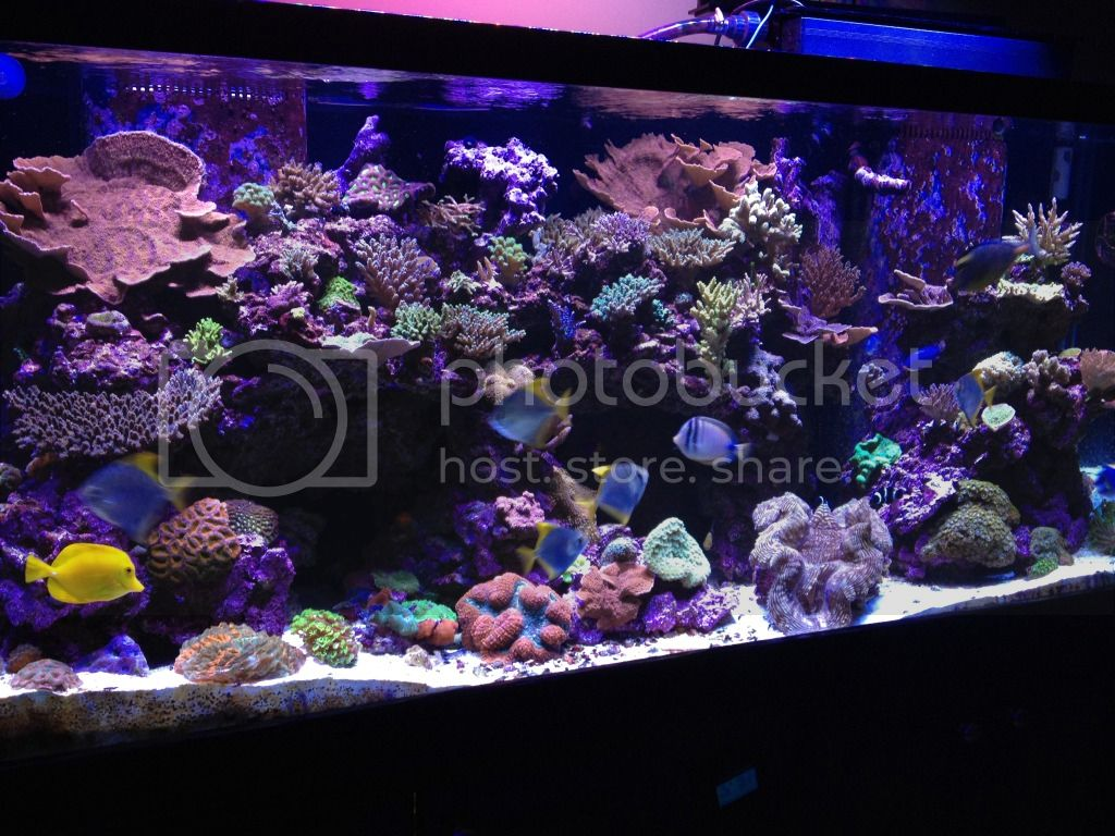 http://i967.photobucket.com/albums/ae157/thatgrimguy/210%20Gallon%20Mixed%20Reef/aaf79ef3.jpg